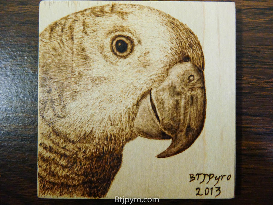Huntington (Parrot) - Wood burning by brandojones