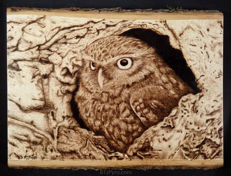 Owl - woodburning