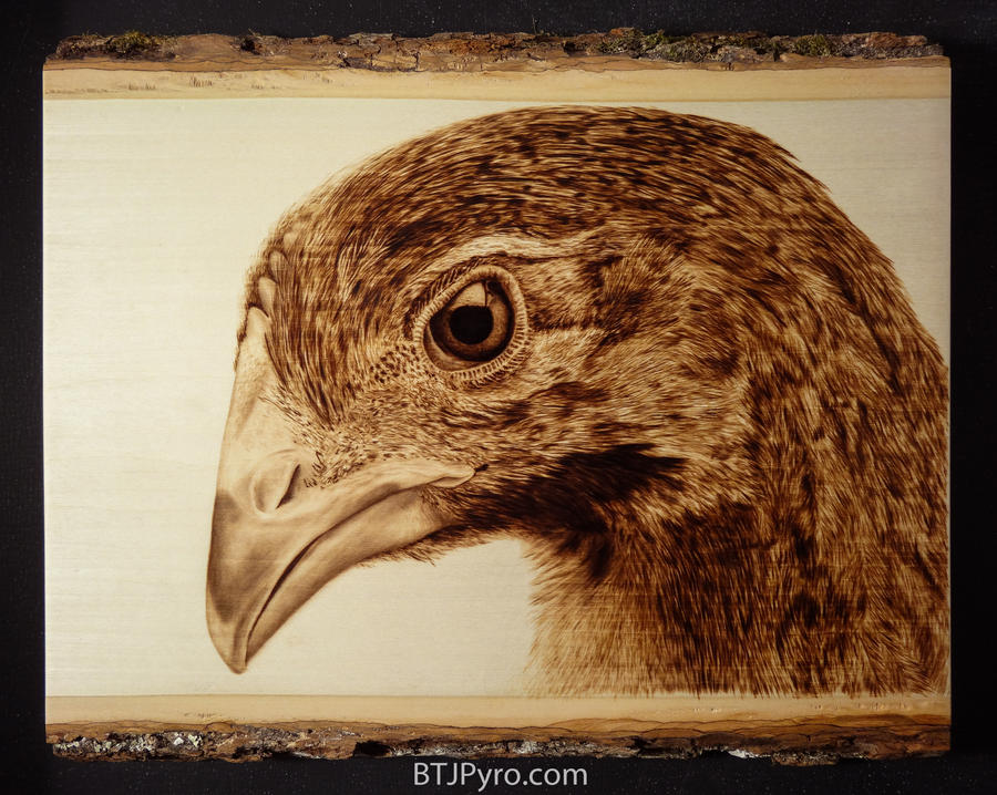 Baby Chicken - Woodburning by brandojones