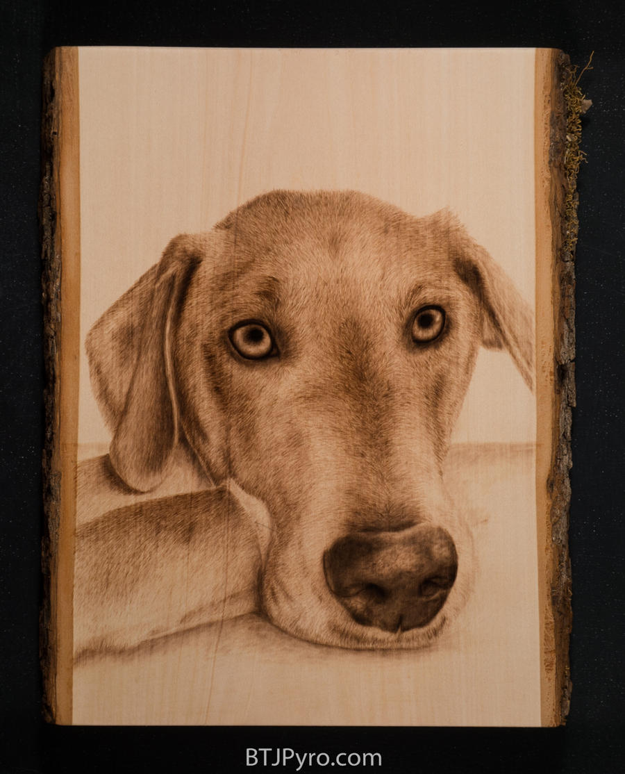 Dog portrait - woodburning by brandojones
