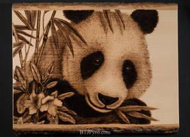 Pyrography portrait of a panda bear