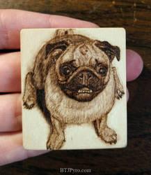 Pyrography Portrait of a Pug