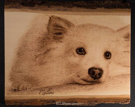 Pyrography Portrait of a Dog