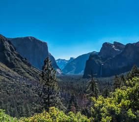 Yosemite National Park #1