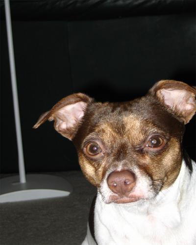 Dog by brandojones