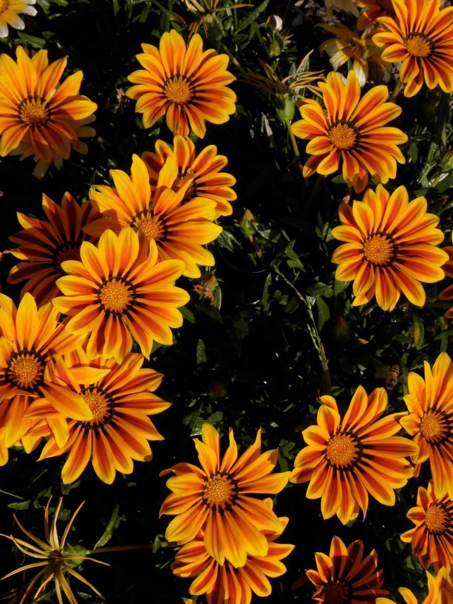 Orange - Page 2 Orange_Suns_by_rising_phenomenon