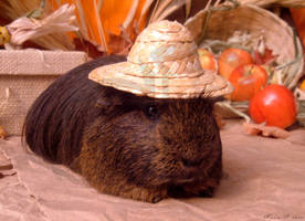 Fall Guinea Pigs - Ponzu by LadyTsunade