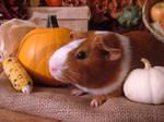 Fall Guinea Pigs: Kokiri