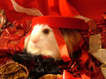 Holiday Guinea Pigs 10