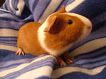 Meet Kokiri