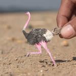 Common Ostrich - Paper cut birds