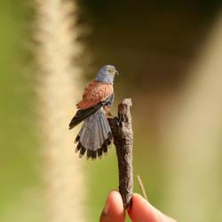 Common Kestrel - Paper cut birds