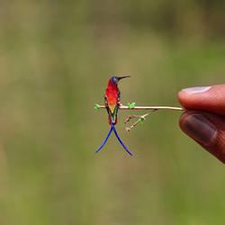 Crimson Topaz - Paper cut birds by NVillustration