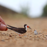Black Skimmer - Paper cut birds by NVillustration