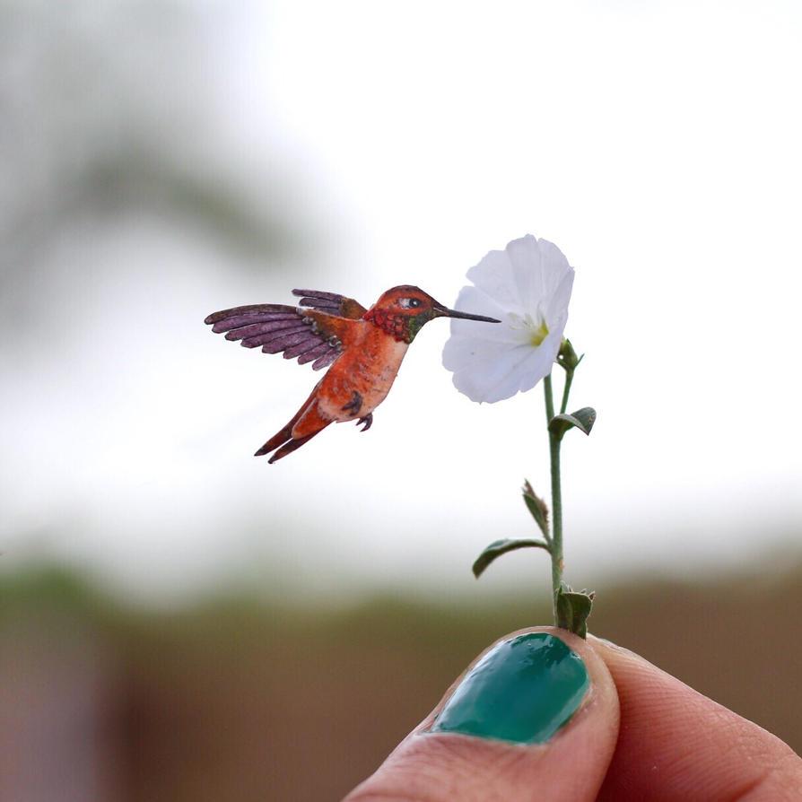 The Rufous Hummingbird - Paper cut birds by NVillustration