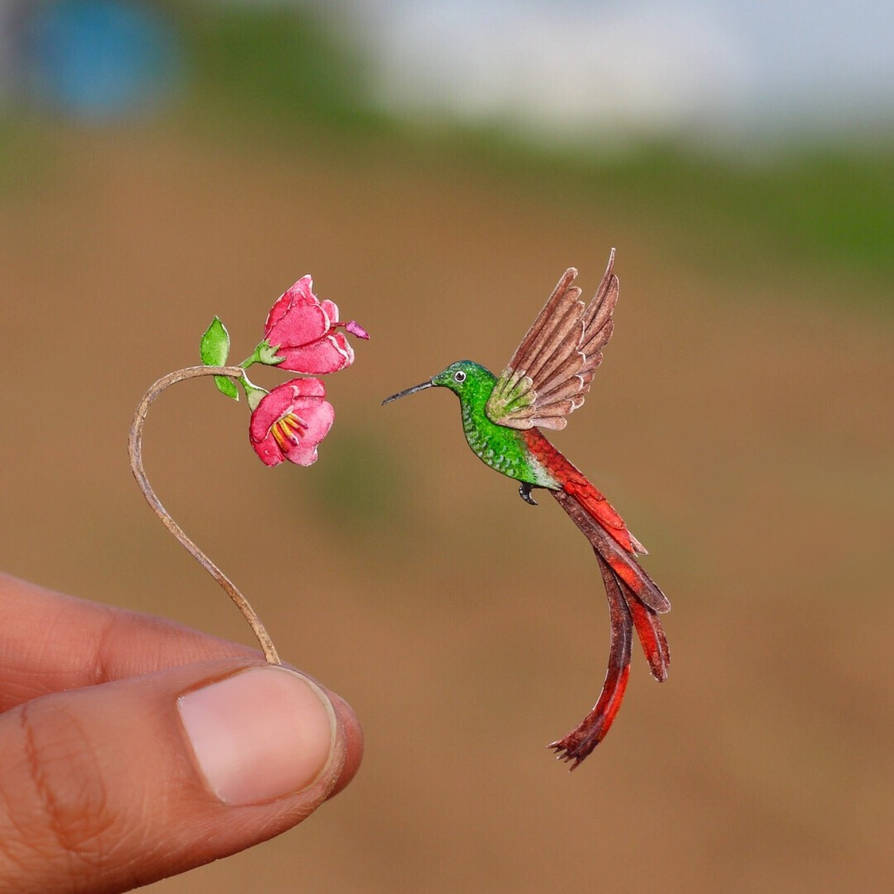 Red tailed Comet Hummingbird - Paper cut birdshumm by NVillustration