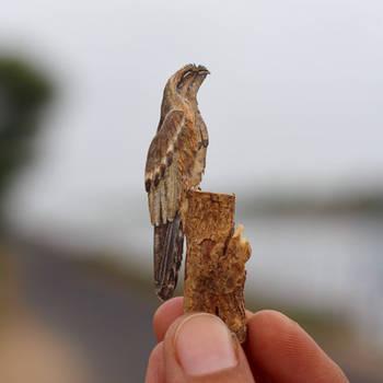 Common Potoo - Paper cut birds