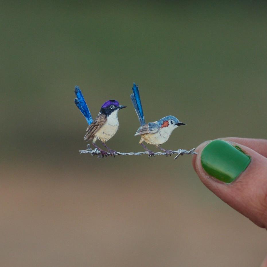 Purple-crowned Fairywren - Paper cut birds by NVillustration