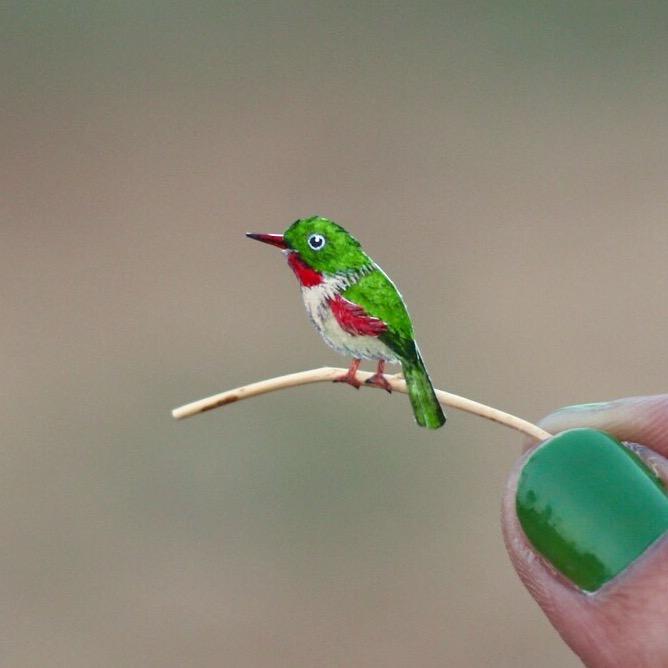 Cuban Tody - Paper cut birds by NVillustration