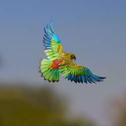 Kea - Paper cut birds
