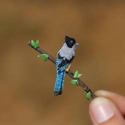 Black-headed Jay - Paper cut birds by NVillustration