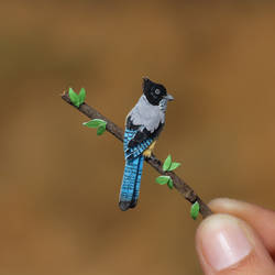 Black-headed Jay - Paper cut birds