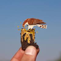 European Honey Buzzard - Paper cut birds by NVillustration