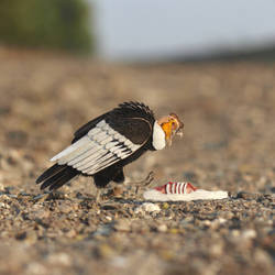 Andean Condor - Paper cut birds