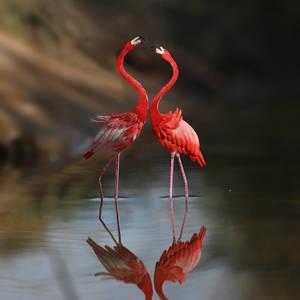 American Flamingo - Paper cut birds