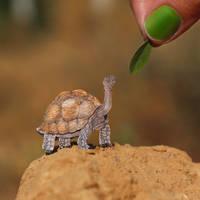Galapagos Tortoise  - Paper cut art