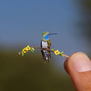 Blue Throated  Hummingbird- Paper cut bird by NVillustration