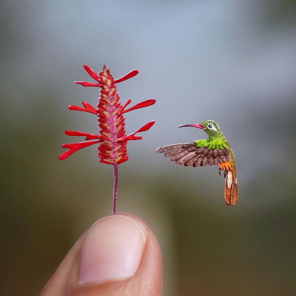 Xantus's Hummingbird- Paper cut bird by NVillustration