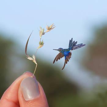 Royal Sunangel Hummingbird - Paper cut bird by NVillustration