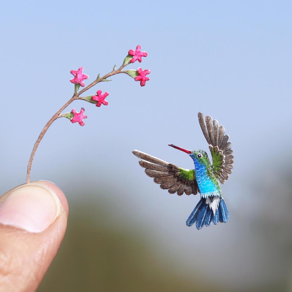 Broad-billed Hummingbird - Paper cut bird by NVillustration