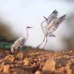 Sandhill Crane - Paper cut birds
