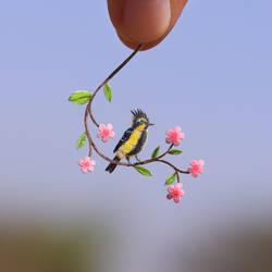 Himalayan Black lored Tit - Paper cut birds
