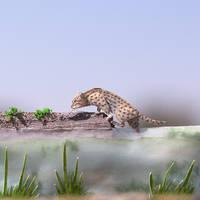 Fishing Cat - Paper cut art by NVillustration
