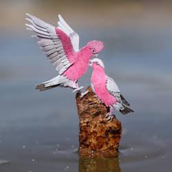 Galah Cockatoos - Paper cut birds by NVillustration