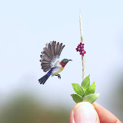 Purple Rumped Sunbird - Paper Cut Birds by NVillustration