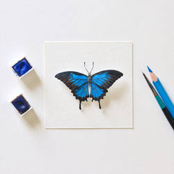 Blue Mountain Swallowtail Butterfly - Paper cut by NVillustration