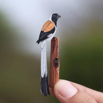 White Belied Treepie - Paper Cut Birds by NVillustration