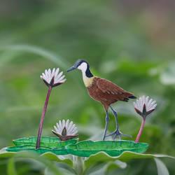 African Jacana - Paper Cut Birds