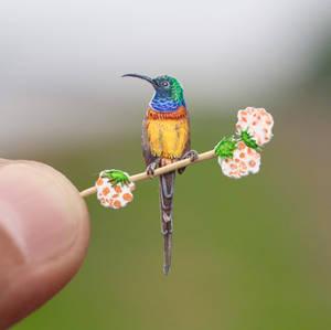 Orange Breasted Sunbird - Paper Cut Birds