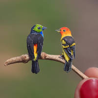 Paradise and Western Tanager  Paper Cut Birds