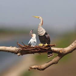 Anhinga - Paper Cut Birds