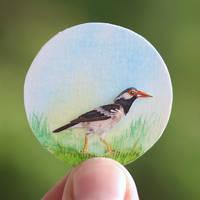 Pied Myna - Paper Cut Birds