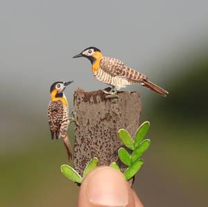 Campo Flicker - Paper Cut Birds