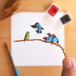 The Blue Manakin mating display - Paper Cut art