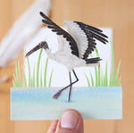 The Wood Stork