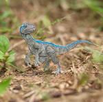 Blue - Velociraptor